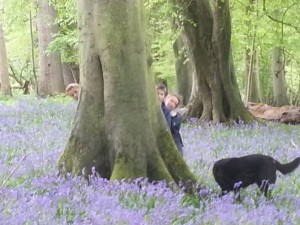 Woods in Spring